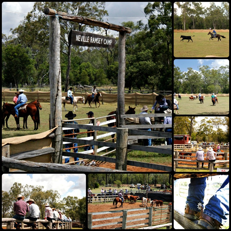 Campdraft Collage