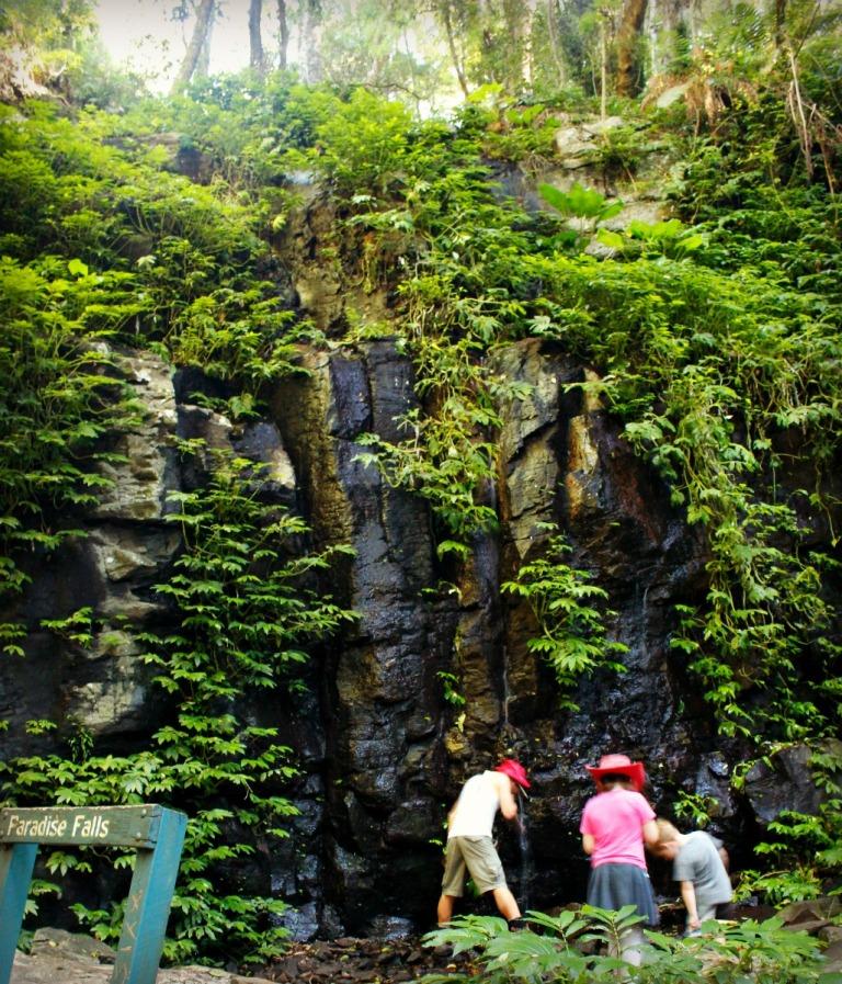 Paradise Falls Bunya Mtns